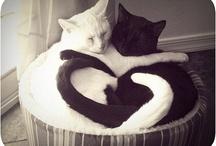 Love is everywhere ♥