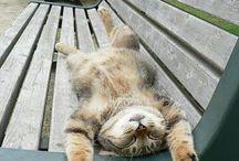 TGIF Kitties