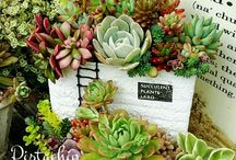 Succulent world
