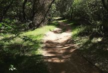 Folsom Lake State Recreation Area / by CA State Parks