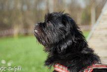 Cursisten van KGC-Delphi / Prachtige plaatjes van mooie hondjes tijdens de cursus