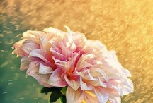 Floral Delights / by Nancy Gallagher