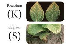plant deficiencies