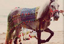 A Horse of Course