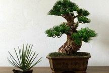atelier naturdekor / handmade produkt - bonsai for home