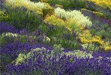 Modern California garden