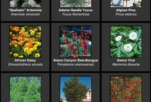 Low-water, High-impact Plants / Xeric plants for the garden. You can have color and interest and conserve water.