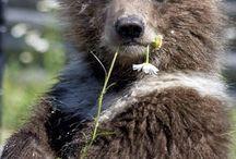 Bears / Bears