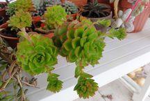 piante che vorrei
