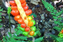 Interesting plants at Lewis Ginter Botanical Garden / by Lewis Ginter Botanical Garden