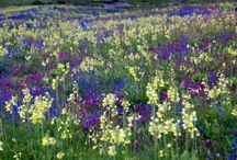 Meadow - bloemenweide