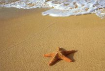 At The Beach / I love the beach and the sound of the waves. / by Debi Puckett