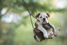 precious pups and pets