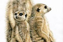 Art - Meerkats
