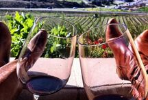 Great tasting winery's  / Different authentic wines / by Heidi Lewis