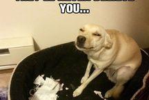 Dog memes / Pups