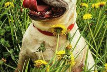 ¡Flores y animales!