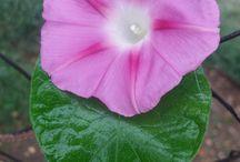 Virágok / A képek magukért beszélnek :)