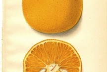fruits, real & drawed