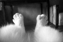cats - katten
