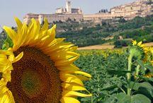 Assisi / Assisi e dintorni con Agriturismo Il Girasole