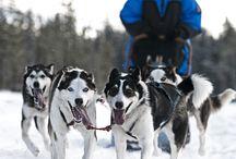 Winter Season 2015 / Winter Season in full swing, welcome book online at www.activelapland.com