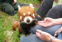 Wellington Zoo NZ