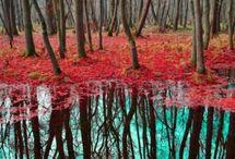 Landscapes  / by Marlene Cobb-Carlson