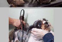 PROTECT ANIMALS / {Stop animal abuse}