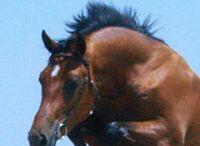 stallions / by Brandy Savarese
