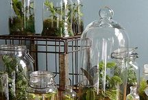 Terrariums / by The Gardener of the Owl Valley