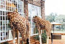 Wonderful Kenya!