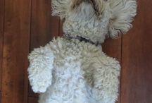 Brandy / My Eastern Mississauga River dog