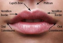 lips reference