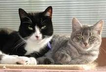 Tuxedo kitties / by Colleen Patrick-Goudreau