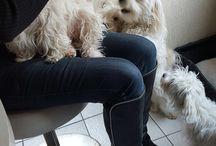 Yules en Jayjay / Mijn puppy's