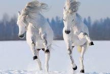 horses//hevoset