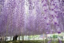 Blooming Away...! / by Francesca Mercurio