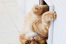 Vicces cicák / Funny cats - kittens / Mulatságos, szórakoztató cicás képek. Funny cat pictures
