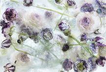 krzuny, chabręzie i kwiatuszki