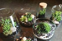 Awesome terrariums