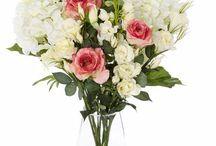 Sala kvety