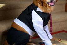 Pet Costume Contest at Spookyville
