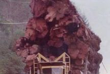 C Logging Trucks / Heavy,Powerful & Resistant Big Trucks,used for Heavy Logging Work.