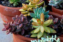 Plants / by Diane Zink