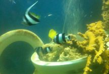 Sealife Adventure in Southend