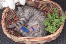 Koty do obejrzenia ;) / Te koty są moje