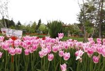 Gaziantep Botanik Bahçesi / Gaziantep Botanical Garden