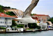 İstanbul Turist Rehberi