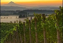 Willamette Valley Art & Photography / by The Allison Inn & Spa (OR Wine Country)